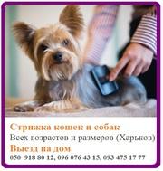 Профессиональная стрижка кошек и собак