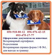 Оформление ветеринарных документов на животных - быстрое оформление сп