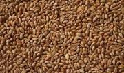 Пшеница в Харькове. Корм с/х животным и птицам