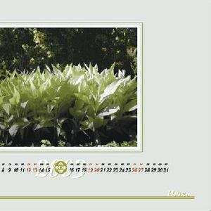 КАЛЕНДАРИ на 2011 год всех видов - настенные,  настольные,  карманные.