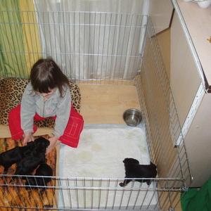Вольер-манеж для содержания щенков или котят 100х100хh60 см