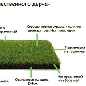 предлагаем  продажу с доставкой и разгрузкой  газон рулонный